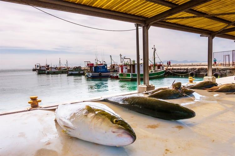 Fresh Fish Kalk Bay