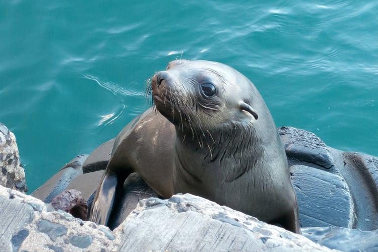 Kalk Bay Seals