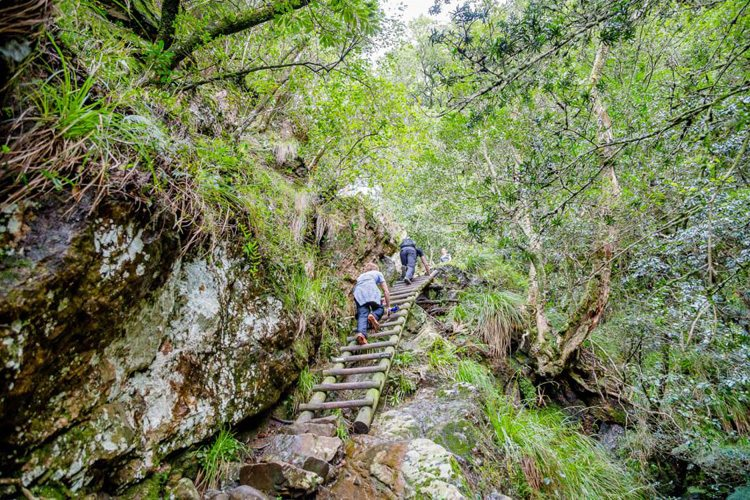 Hiking Trails Cape Town Skeleton Gorge