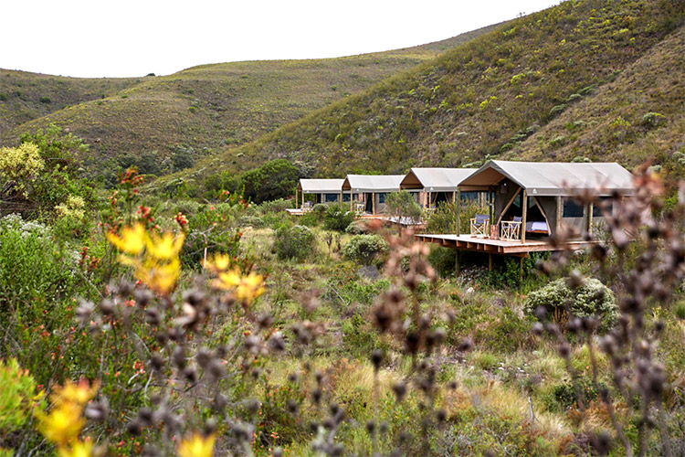 Best Glamping in The Western Cape: Tented Eco Camp at Gondwana Game Reserve