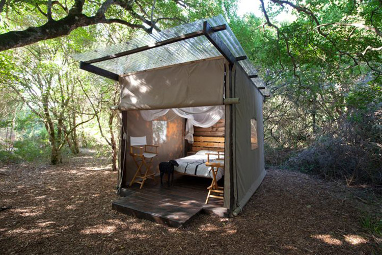 Best Glamping in The Western Cape: Platbos Forest