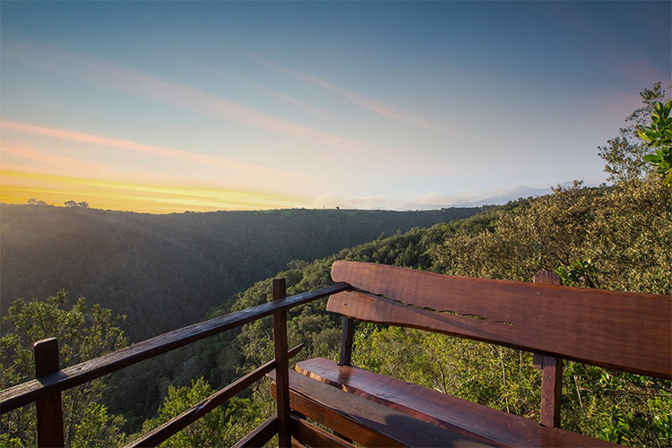 Best Glamping in The Western Cape: Teniqua Treetops View