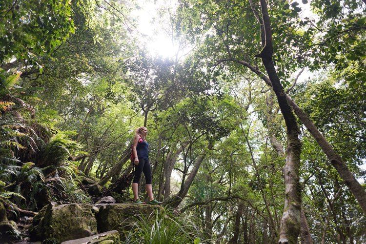 Constantia Nek Kirstenbosch Table Mountain Hike