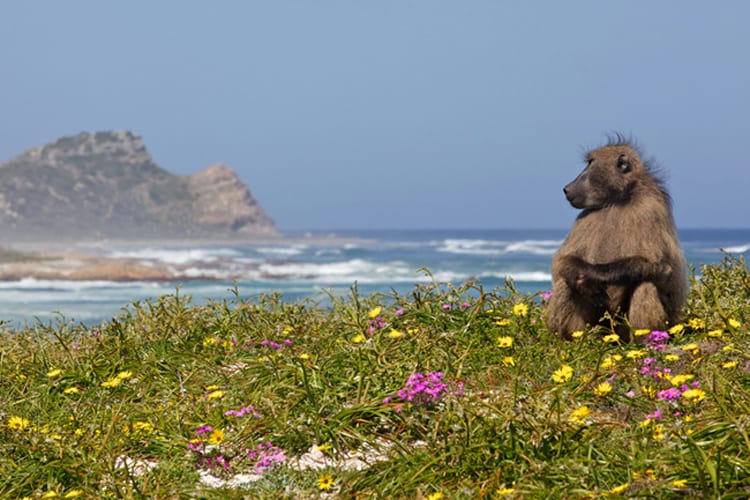 Game Viewing: The Best Things to do at Cape Point