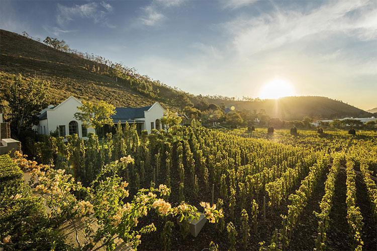 Leeu Estates Winelands Accommodation