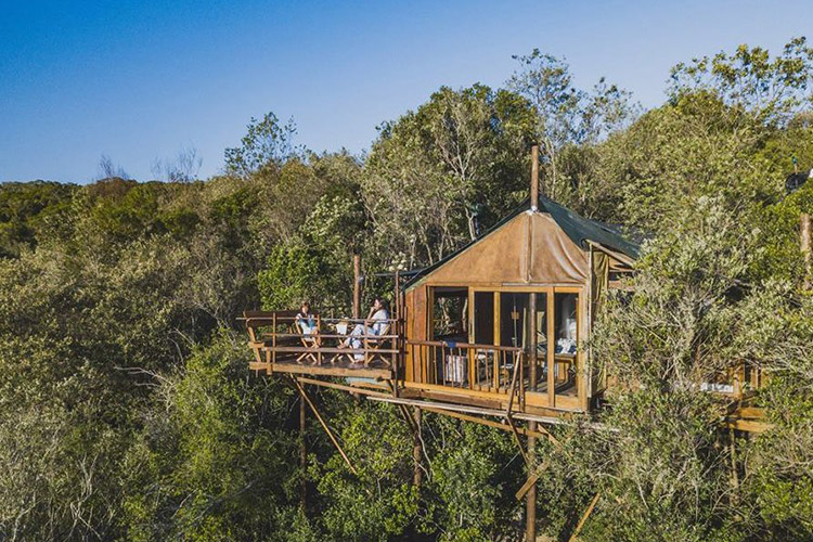 Secluded Getaways in The Cape: Teniqua Treetops