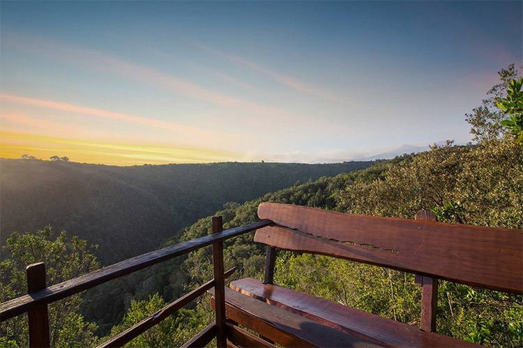 Secluded Getaways in The Cape: Teniqua Treetops View