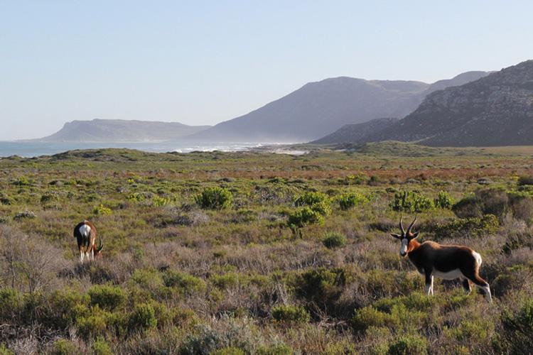 Cape Point Nature Reserve Landscape