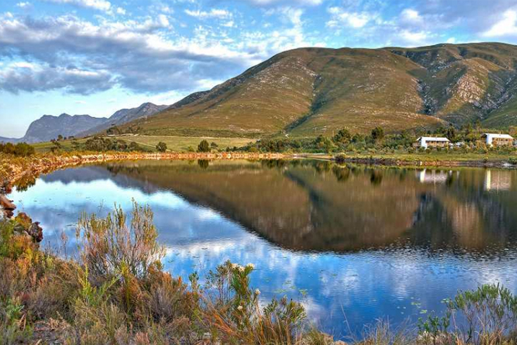 Pet-Friendly Getaways Western Cape: AfriCamps at Stanford Hills Setting