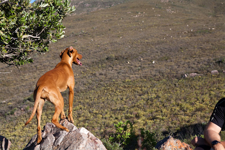 Pet-Friendly Getaways Western Cape: Cederkloof Botanical Retreat Dog